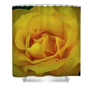 Moms Yellow Rose Shower Curtain