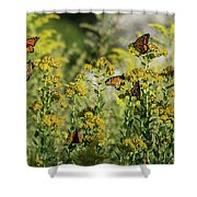 Monarch 6 Shower Curtain