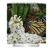 Monarch And The Butterfly Bush  Shower Curtain