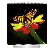 Monarch And Tithonia Light And Shadow Shower Curtain