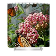 Monarch Arc Shower Curtain