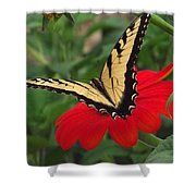 Tiger Beauty Shower Curtain