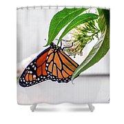 Monarch Butterfly In The Garden 3 Shower Curtain