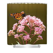 Monarch Butterfly 5 Shower Curtain