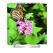 Monarch Butterfly And Honey Bee Shower Curtain