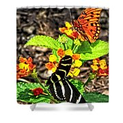 Monarch Butterfly And Zebra Butterfly Shower Curtain