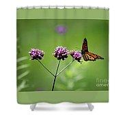 Monarch Butterfly Balanced 2017 Shower Curtain