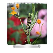 Monarch Butterfly Caterpillar Shower Curtain