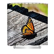 Monarch Butterfly I Shower Curtain