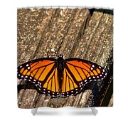 Monarch Butterfly II Shower Curtain