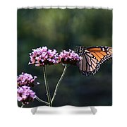 Monarch Butterfly IIi Shower Curtain