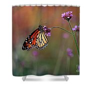 Monarch Butterfly In Autumn 2011 Shower Curtain