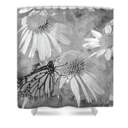 Monarch Butterfly In Black And White Shower Curtain