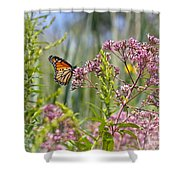 Monarch Butterfly In Joe Pye Weed Shower Curtain