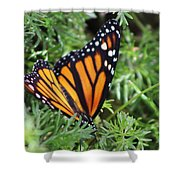 Monarch Butterfly In Lush Leaves Shower Curtain