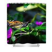 Monarch Buttefly Shower Curtain