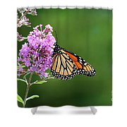 Monarch Butterfly On Butterfly Bush 2011 Shower Curtain