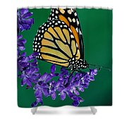 Monarch Butterfly On Flower Blossom Shower Curtain