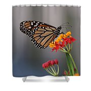 Monarch Butterfly On Milkweed Shower Curtain