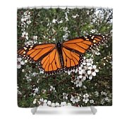 Monarch Butterfly On New Zealand Teatree Bush Shower Curtain