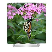 Monarch Butterfly On Pink Flowers  Shower Curtain