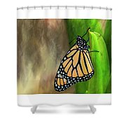 Monarch Butterfly Poised On Green Stem Shower Curtain