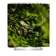 Monarch Caterpillar Shower Curtain