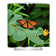 Monarch Butterfly Resting On Cassia Tree Leaf Shower Curtain