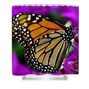 Monarch Dreams Shower Curtain