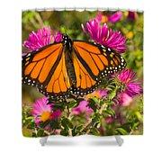 Monarch Feeding Shower Curtain