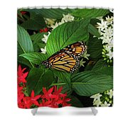 Monarch Framed Shower Curtain