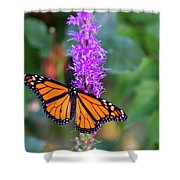 Monarch Of The Garden Shower Curtain