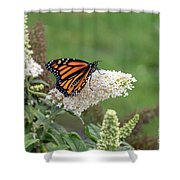Monarch On A Butterfly Bush Shower Curtain