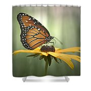 Monarch On A Black Eyed Susan Shower Curtain