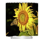 Monarch On A Sunflower Shower Curtain