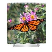 Monarch On Blanket Flower Shower Curtain