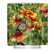 Monarch On Blanketflower Shower Curtain
