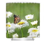 Monarch On Daisies Shower Curtain
