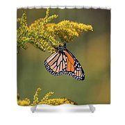 Monarch On Goldenrod Shower Curtain