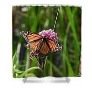 Monarch On Joe Pye Shower Curtain