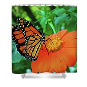Monarch On Mexican Sunflower Shower Curtain