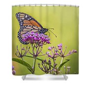 Monarch On Pink Flower Shower Curtain