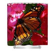 Monarch On Summer Geraniums Shower Curtain