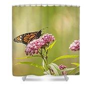 Monarch On Swamp Milkweed 2014-1 Shower Curtain