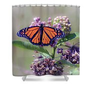 Monarch On The Milkweed Shower Curtain