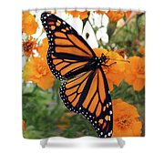 Monarch Series 1 Shower Curtain
