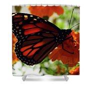 Monarch Series 8 Shower Curtain