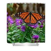 Monarch Spreading Its Wings Shower Curtain