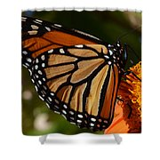Monarch Up Close Shower Curtain