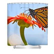 Monarch Working Shower Curtain